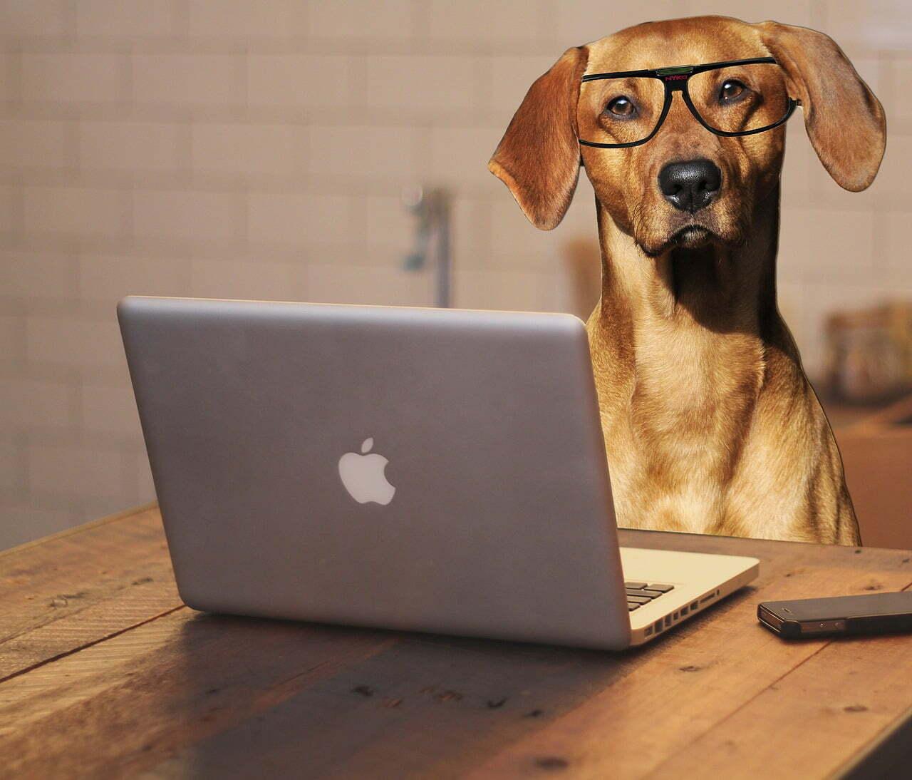 office dog edgar